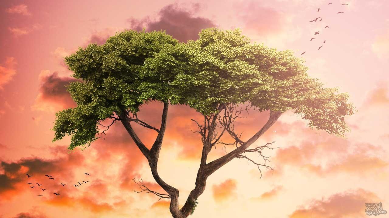 Tribal East - Family Tree